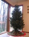 Naked_tree_small