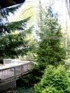 Deck_pines